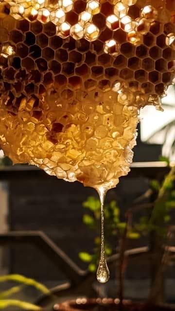 secret-de-miel